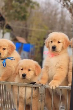Cute Baby Puppies, Super Cute Puppies, Super Cute Animals, Cute Little Animals, Cute Funny Dogs, Cute Cats And Dogs, Cute Funny Animals, Funny Pets, Cute Puppy Videos