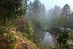 Dark Forest, Light Of My Life, Painting Inspiration, Mists, Summertime, Art Projects, Beautiful Places, Scenery, Earth