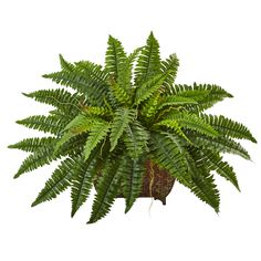 Polish off the look of a table, shelf or desk with this Nearly Natural Boston Fern in Metallic Planter. Ideal for a table centerpiece. Fern Houseplant, Hosta Plants, Fern Plant, Ivy Plants, Faux Plants, Foliage Plants, Plant Leaves, Plants Indoor, Green Leaves