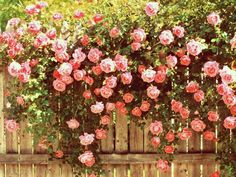 rose vintage picture hd | Desktop Backgrounds for Free HD Wallpaper | wall--art.com