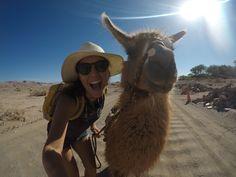 Leis que você não vai acreditar que existem no Deserto do Atacama! Leis, Chile, Animals, Sidewalk, Chili Powder, Animaux, Chilis, Animal, Garlands