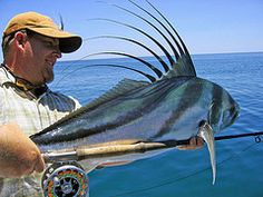 A beautiful Roosterfish on a fly (Hatch Outdoors)