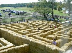 Pick your own apples plus fall activities like hayrides, corn maze and fall treats every weekend at Larriland Farm Fall Festival Activities, Autumn Activities, Pick Your Own Apples, Corn Maze, Fall Treats, Maryland, Playground, Places To Go, Things To Do