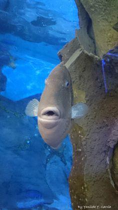 Aquarium, San Sebastián. España