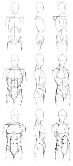 Basic Male Torso Tutorial by timflanagan.deviantart.com on @deviantART