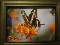 Butterfly in Roatan Honduras Roatan, Honduras, Butterfly, Photography, Painting, Ebay, Art, Art Background, Photograph