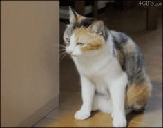 Mostly cats and some dogs and a cheerleader crab - Imgur