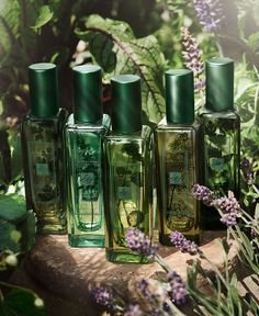 Jo Malone London | The Herb Garden | The Collection reflects the diversity of herbs, their natural playfulness and different characters.