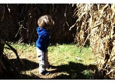 OUTLINE OF LIFE: The Pumpkin Farm in Pictures (and a few words)