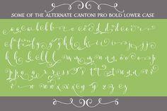 Cantoni Pro Bold Hand Lettered Font by DebiSementelli on @creativemarket