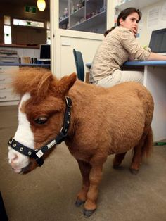 the mini horse, a necessity for any mini farm. Her name will be Cherry Popsicle, but she'll go by Poppy, for short.