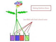 make rainbow roses on pinterest rainbow roses stems and