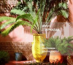 Moroccan Garden Royalty-free Image   Getty Images   114944564