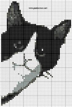 Gato negro y blanco