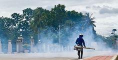 A Dengue-láz egy igen elterjedt, magas lázzal járó vírusos megbetegedés, ami bár lehet nagyon súlyos is, jellemzően enyhe lefolyású.