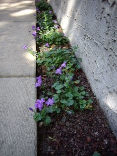 this website, called northernshade.ca has an alphabetized list of plants that grow in shade