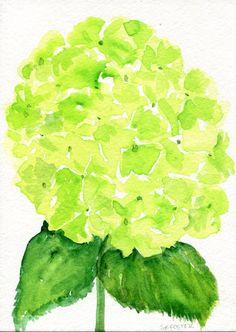 Hydrangeas watercolors paintings original 5 x 7 by SharonFosterArt