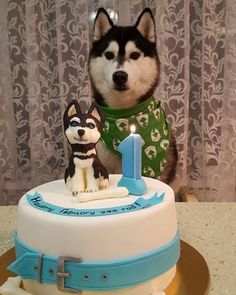 Learn even more info on husky. Browse through our site. My Husky, Siberian Husky Puppies, Husky Puppy, Siberian Huskies, Cute Puppies, Cute Dogs, Dogs And Puppies, Doggies, Animals And Pets
