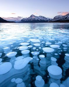 Taken by Callum Snape who is based in BC: It was like being on another planet the beautiful frozen methane bubbles trapped in a frozen Abraham Lake #wonder #secondfavouritesnape