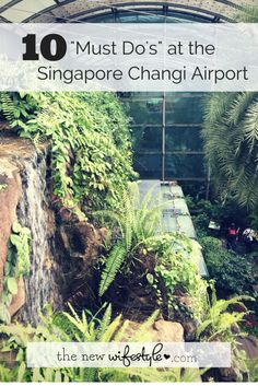 Things To Do at the Singapore Changi Airport - they have a butterfly pavilion and movie theater!