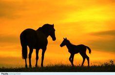 Paarden in wei - Plazilla.com
