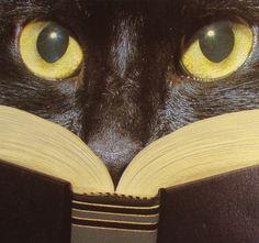 """Disfrutando de """"El Gato Negro"""" de Edgar Allan Poe:-["""