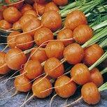 Worteltjes telen  in potten    Worteltjes zijn ideaal om in potten te telen. Kies voor een snel groeiende zomerwortel voor een maximale oogst. De diepte van de pot is afhankelijk van het soort worteltjes dat u gaat telen. Voor de Parijse worteltjes is een