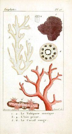 Vintage Printable at Swivelchair Media - Beta | Animal – Sea shells and related