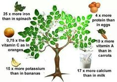 The many health benefits of Moringa oleifera: http://www.naturalnews.com/042435_Moringa_oleifera_health_benefits_herbal_medicine.html