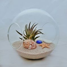 Keep a zero maintenance air plant at your desk in a beach-themed terrarium.