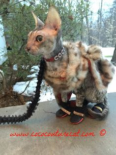 Coco, the Couture Cat: BlogPaws Wordless Wednesday Blog Hop: Dress It Up!... Pet Fashion, Cat Walk, Wednesday, Couture, Pets, Blog, Animals, Walkway, Animales