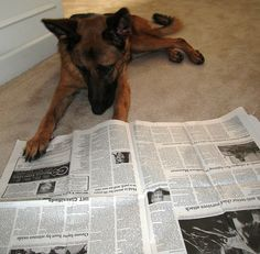 We've asked our staff and patrons to share photos of their reading pets. Coco obviously enjoys staying on top of current events by reading the newspaper.