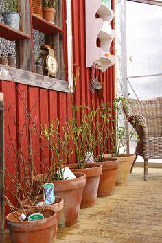 Ruusunmekko garden's greenhouse 'Kyökki' in March 2015