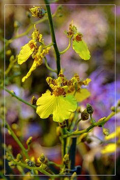 czar orchidei | Flickr - Photo Sharing!