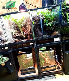 ❤ We have a great selection of accessories, habitat, decorations and more to create a beautiful environment for your reptiles! 🦎🐍 We are here to help if you have any questions! Visit our online store to see the choices! REMINDER: As of tomorrow, wearing a mask 😷 is mandatory to enter the store! #MagazooReptiles Reptile Accessories, Reptile Enclosure, Reptiles, Habitats, Choices, Aquarium, Environment, Decorations, Create