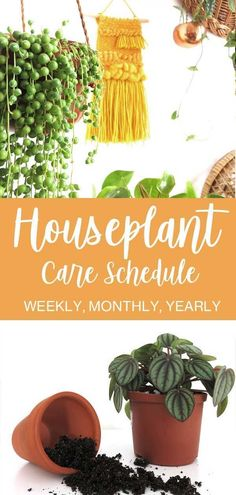 garden care schedule Want to learn how - gardencare Easy House Plants, House Plants Decor, Indoor Gardening Supplies, Gardening Tips, Organic Gardening, Hanging Plants, Indoor Plants, Diy Hanging, House Plant Care