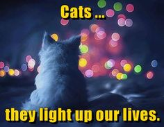 Cats ... they light up our lives.