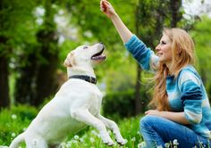 15 Dog Training Tips To Get Dog Come To You When Called  #dogs #dog #PetCare #pet