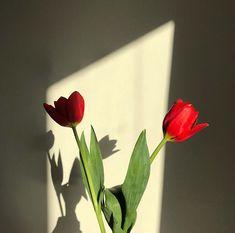 𝓹𝓲𝓷𝓽𝓮𝓻𝓮𝓼𝓽 - @cнαsαкυяα All Flowers, Flowers Nature, My Flower, Flower Power, Beautiful Flowers, Plant Aesthetic, Flower Aesthetic, Red Aesthetic, Plants Are Friends