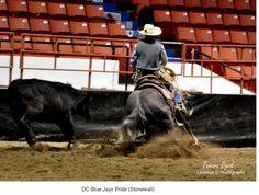 Lonesum D Ranch ~LonesumDPhotography  •Horse Training •Horses For Sale •Stallions •Art&Photography •Saddles & Custom Leather •Australian Shepherds & Papillons  http://www.lonesumdranchsaddlery.citymax.com/homepage.html