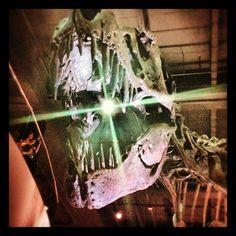 "#hmnspaleo @polly_pocket08's photo: ""#nature #hmns  #dinosaur #bones #fossil #fossils"""