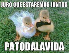 PATOdalavida  #meme