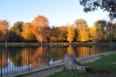 Villone Puccini Park