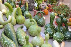 Life, passion and beauty: Pictures: Expozitia de flori, fructe si seminte Eggplant, Vegetables, Vegetable Recipes, Eggplants, Veggies, Branches