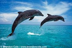 Dolphines jumping on a sunny day.