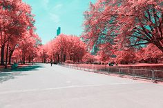 paolo pettigiani sees new york city's central park in pink and blue
