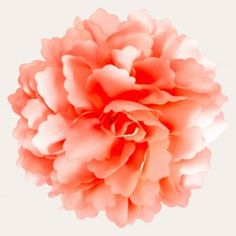 A peony with beautiful coral or salmon coloured ruffly petals adds a feminine touch with a little extra pizazz. It can be worn as a hair clip or brooch, adding captivating style to your elegant ensemble.