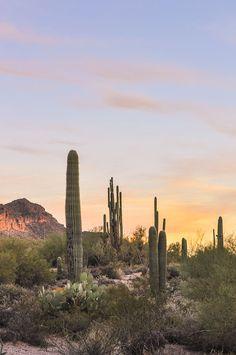 Saguaro Cactus along Maricopa Trail near Mesa, Arizona Looking for great hiking near Mesa, Arizona? Experience the beauty of the Sonoran Desert with these five easy trails. Visit Arizona, Arizona Travel, Sedona Arizona, Arizona Usa, Desert Aesthetic, Nature Aesthetic, Las Vegas Hotels, Arizona Robbins, Bonifacio