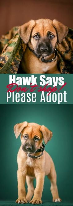 """Meet our newest Kozy Kitchen member, Hawk! He is our rescue puppy that is a boxer/shepherd mix, and just about the cutest thing on 4 feet. He says, """"Don't Shop Please Adopt""""."""