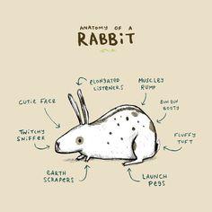 funny Rabbit Body Parts Chart | Shirts, Anatomy of a Rabbit | TeePublic